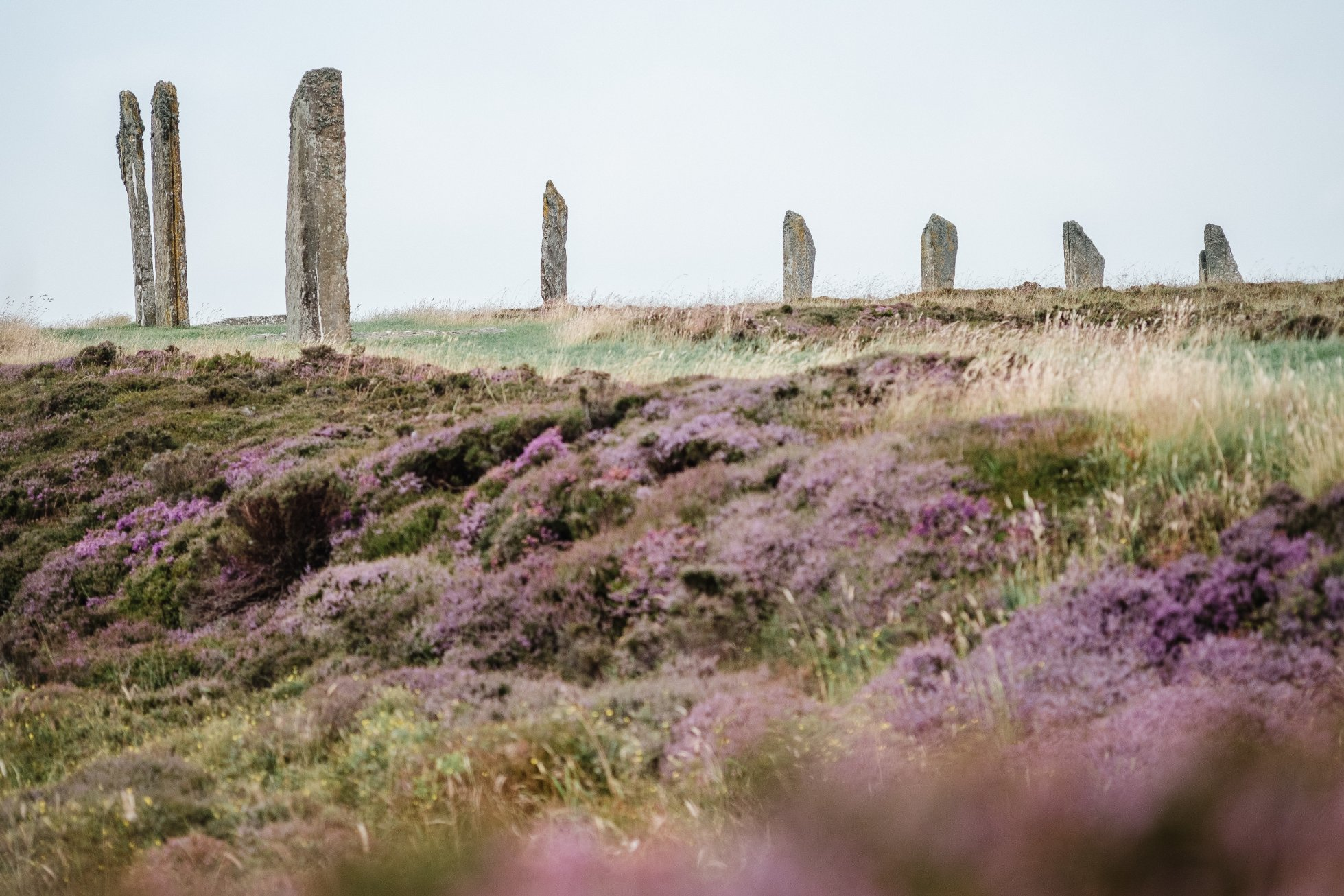 The Ring of Brodgar, Orkney - image by Sveta Damiani
