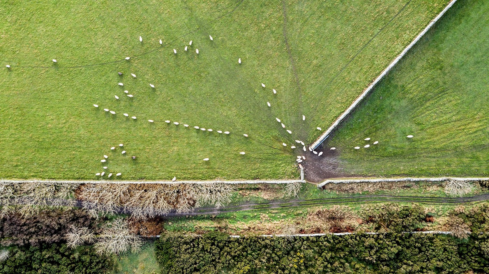 Sheep at Binscarth, Orkney - image by Andras Farkas
