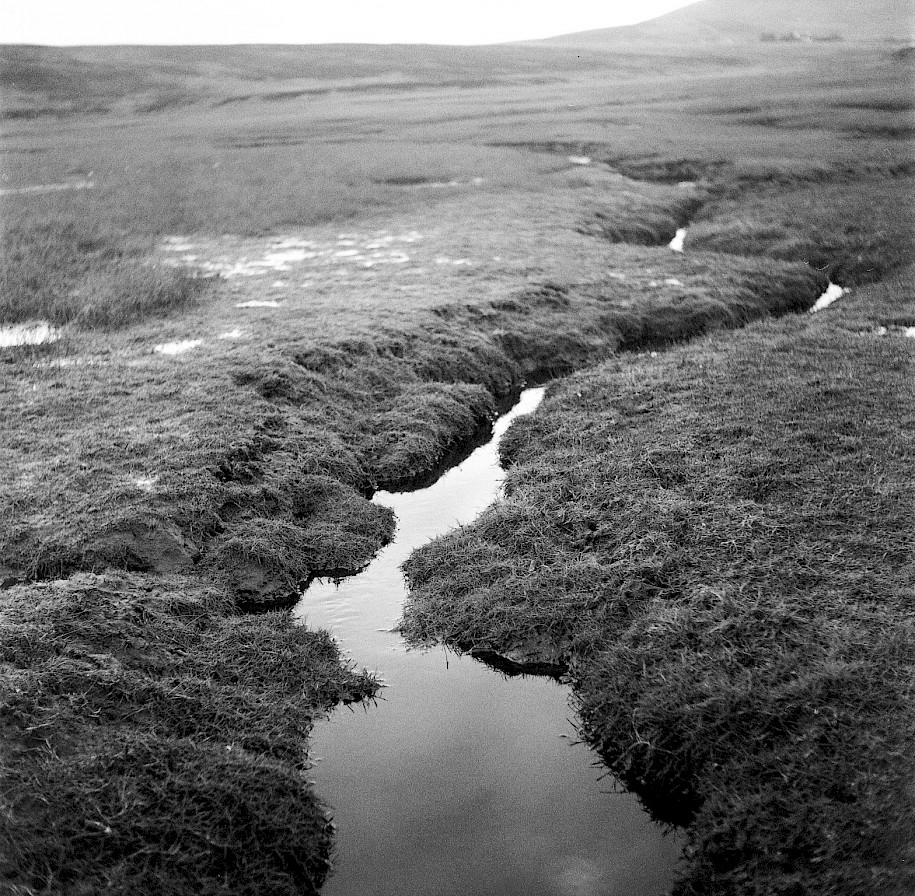 Marshland, Waulkmill Bay - image by Sarah Wylie