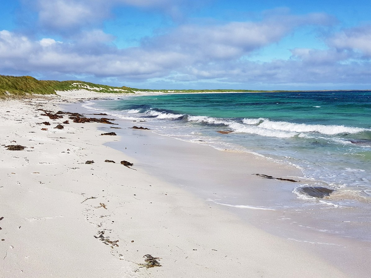 One of Sanday's beautiful beaches - image by Susanne Arbuckle