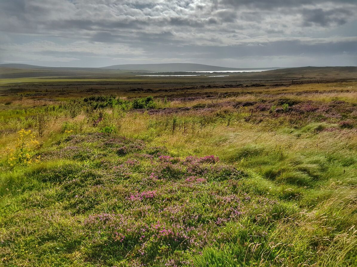 Moorland and peat hills in Eday - image by Susanne Arbuckle