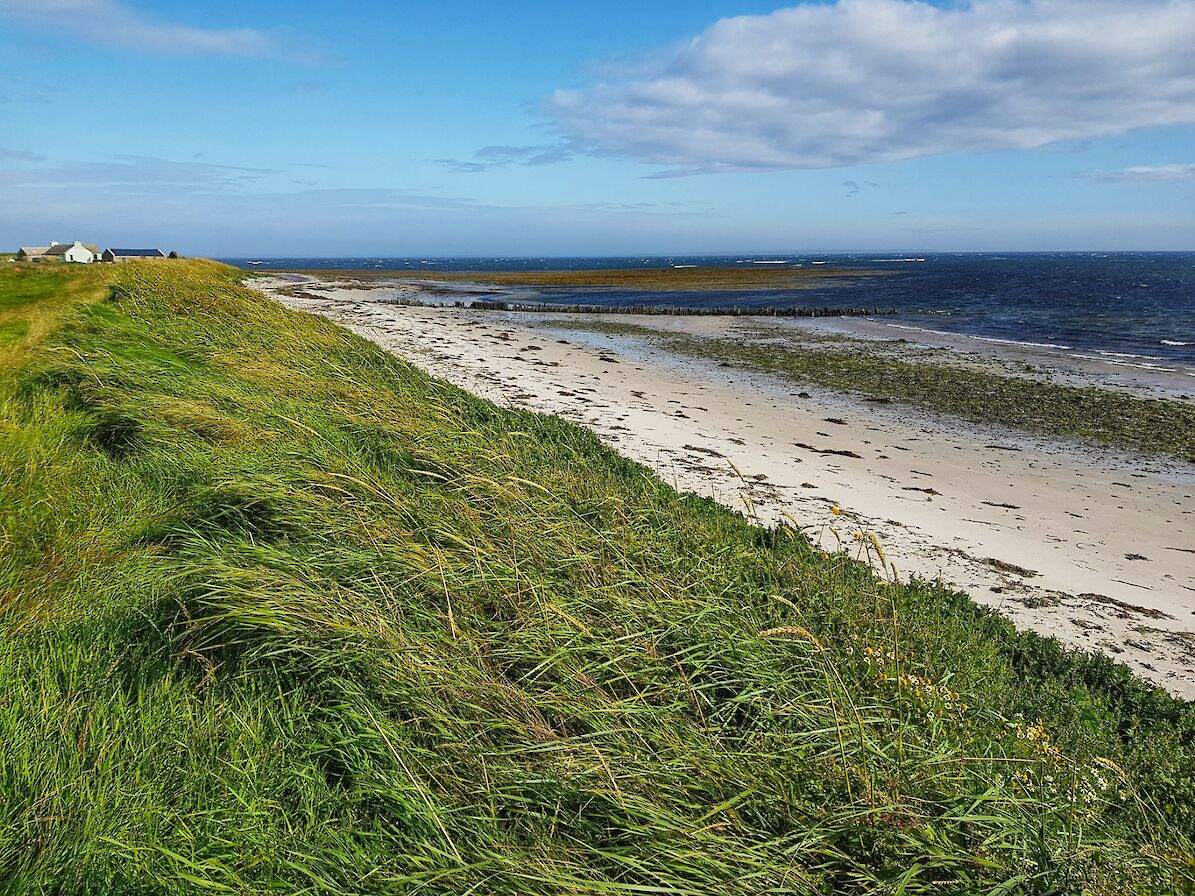 Quiet stretch of coastline in Eday - image by Susanne Arbuckle