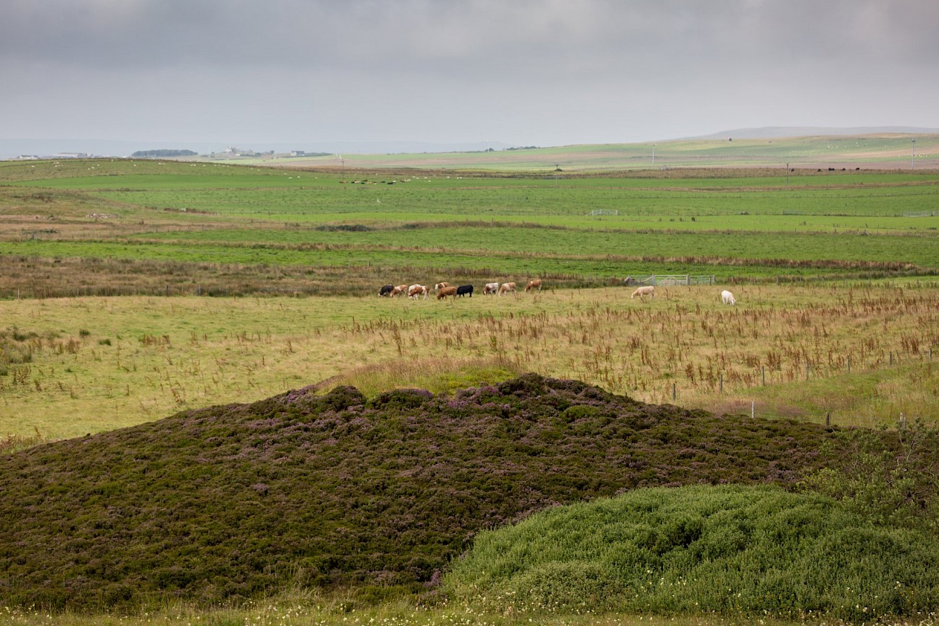 Walk to the Knowes of Trotty, Orkney