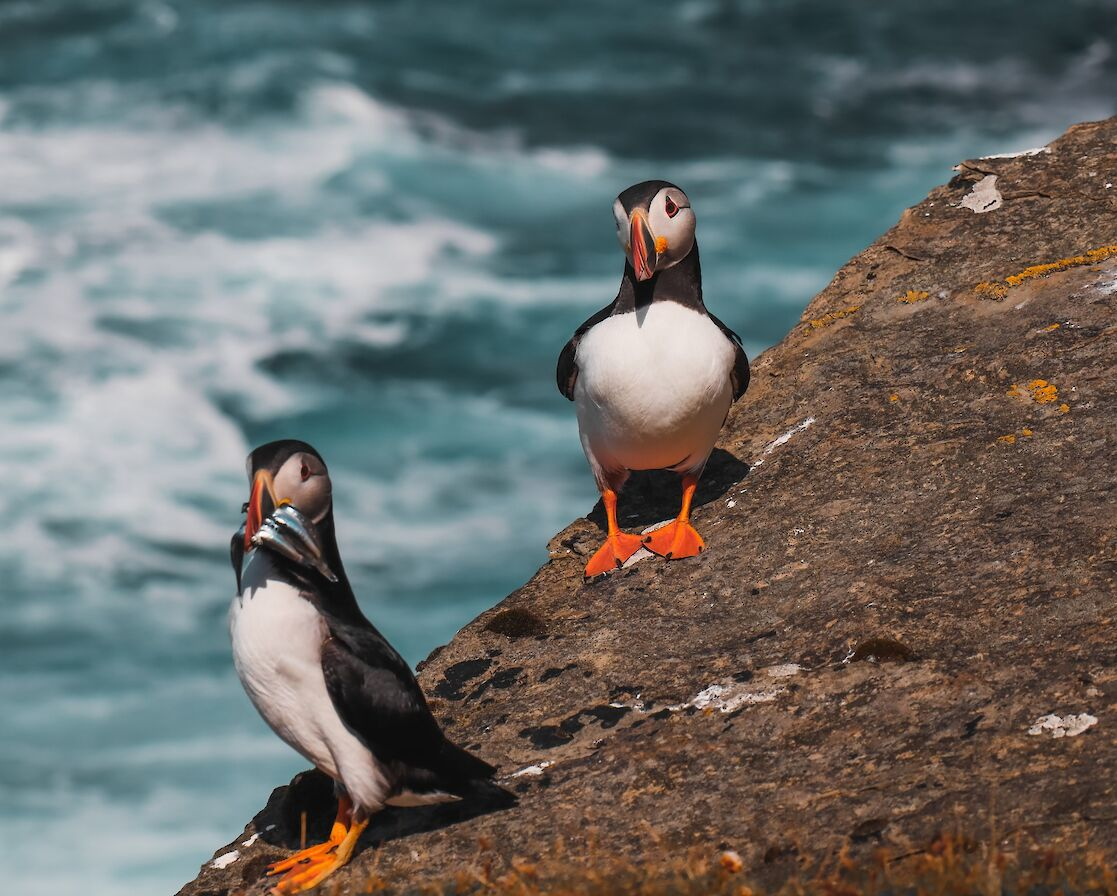 Puffins in Orkney - image by Rachel Eunson