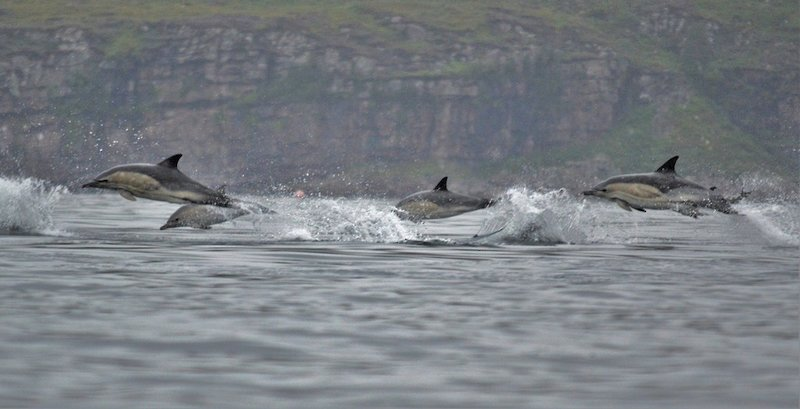 This pod of dolphins were keen to grab a look - image by David Gange