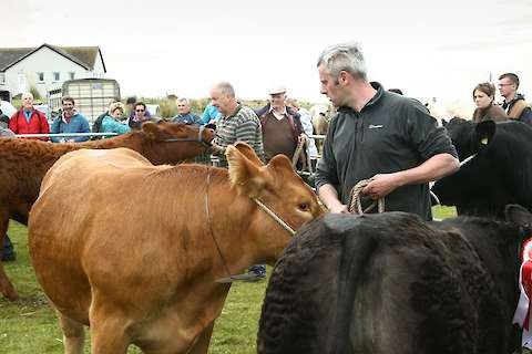 Some of the action from the Sanday Show last year
