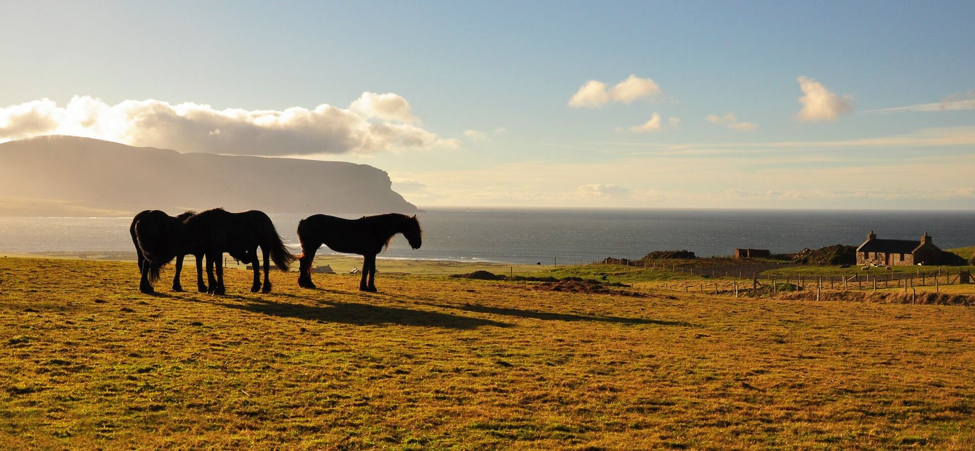 Horses on the hill outside Stromness - image by Glenn McNaughton