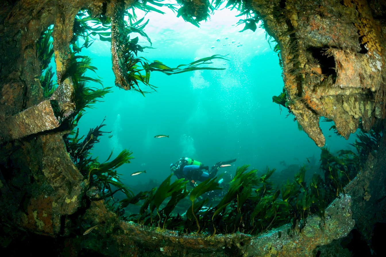 Diving on the wreck of the Tabarka, one of the blockships in Scapa Flow - image by Matt Doggett